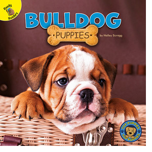 Cover: Bulldog Puppies