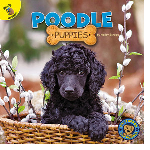 Cover: Poodle Puppies