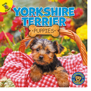 Cover: Yorkshire Terrier Puppies