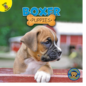 Cover: Boxer Puppies