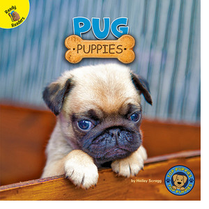 Cover: Pug Puppies