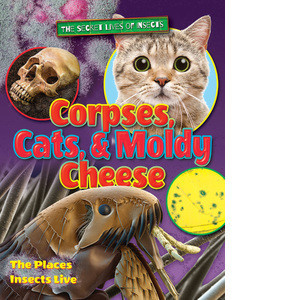 Cover: Corpses, Cats, and Moldy Cheese: The Places Insects Live