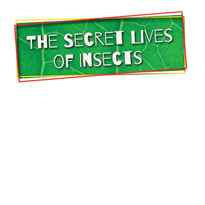 Cover: The Secret Lives of Insects
