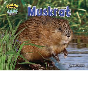 Cover: Muskrat