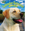 Cover: Labrador Retriever: Most Popular