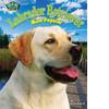Cover: Labrador Retriever: Most Popular