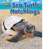 Cover: Sea Turtle Hatchlings