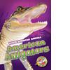 Cover: American Alligators