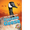 Cover: Canada Geese