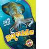 Cover: Squids