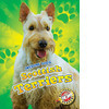Cover: Scottish Terriers
