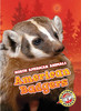 Cover: American Badgers