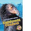 Cover: California Condors