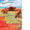 Cover: Christmas Island Red Crab Migration