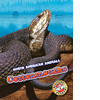 Cover: Cottonmouths