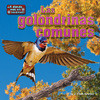 Cover: Las golondrinas comunes/Barn Swallows