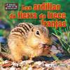 Cover: Las ardillas de tierra de trece franjas (squirrels)