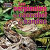 Cover: Las serpientes de cascabel de bandas (rattlesnakes)