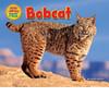 Cover: Bobcat