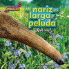 Cover: Mi nariz es larga y peluda (nose)