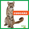 Cover: Cougars
