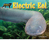 Cover: Electric Eel