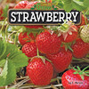 Cover: Strawberry