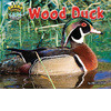 Cover: Wood Duck