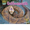 Cover: Cottonmouth