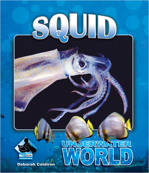 Cover: Squid