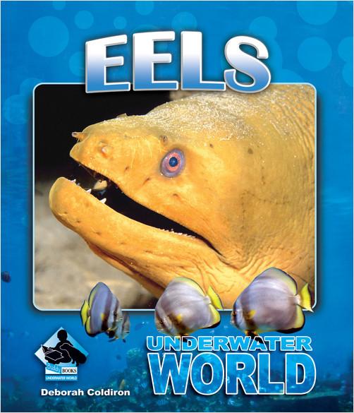 Cover: Eels