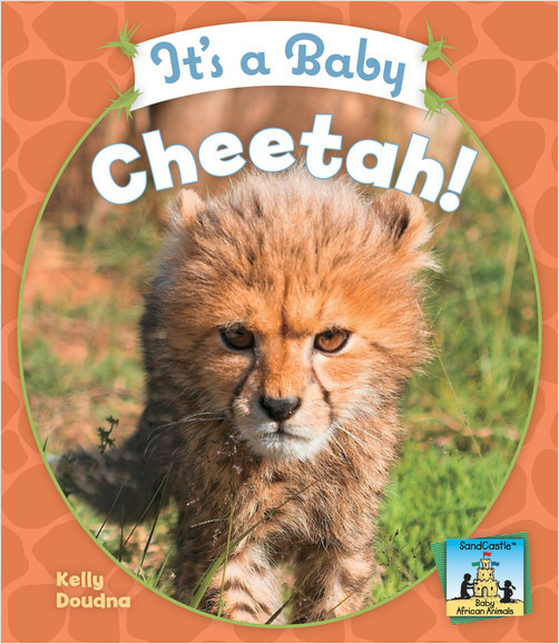 Cover: It's a Baby Cheetah!