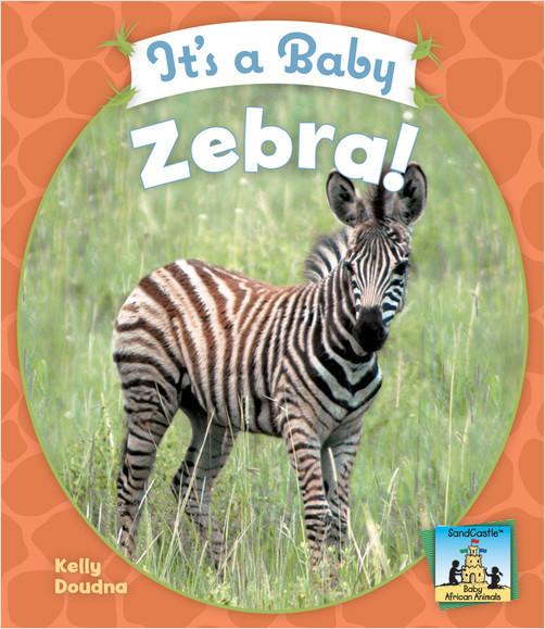 Cover: It's a Baby Zebra!