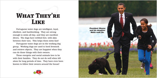 Cover: Portuguese Water Dogs
