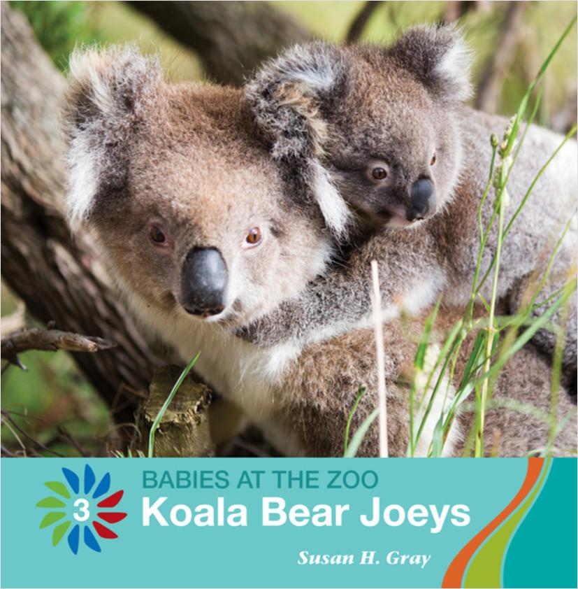 Cover: Koala Bear Joeys