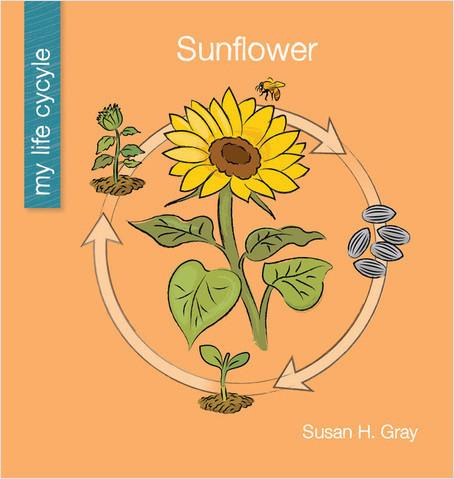 Cover: Sunflower