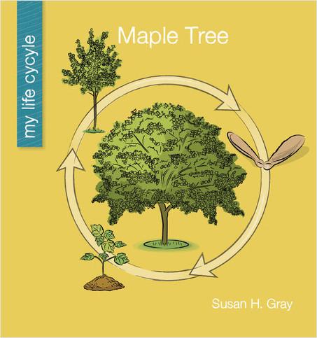 Cover: Maple Tree