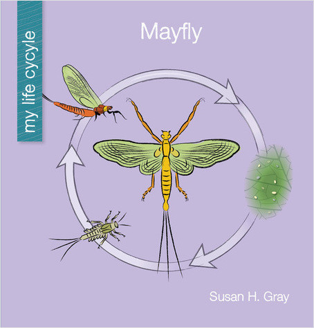 Cover: Mayfly