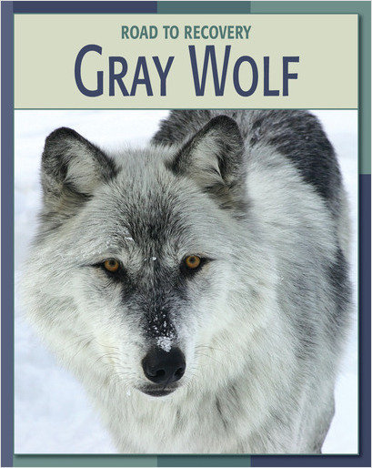 Cover: Gray Wolf