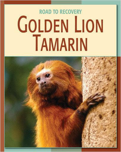Cover: Golden Lion Tamarin