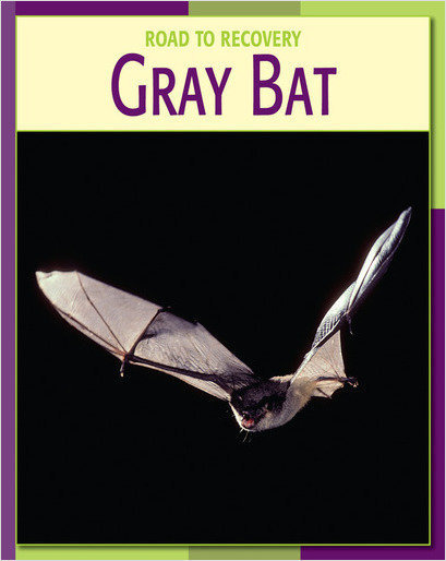 Cover: Gray Bat
