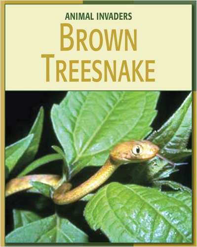 Cover: Brown Treesnake