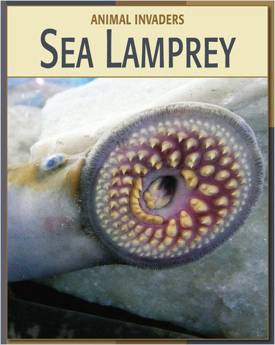 Cover: Sea Lamprey