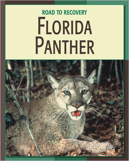 Cover: Florida Panther