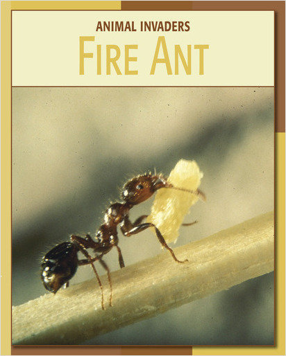 Cover: Fire Ant