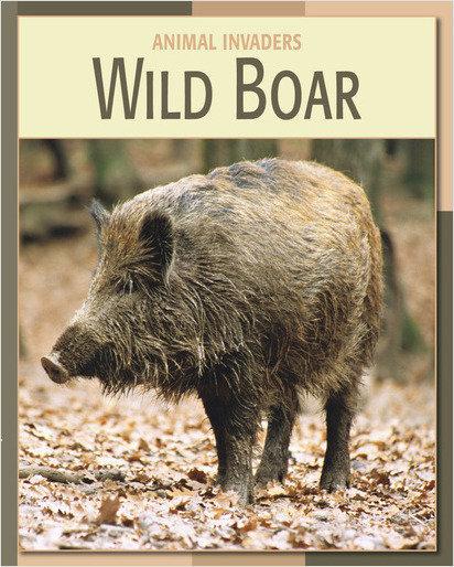 Cover: Wild Boar