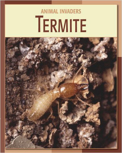 Cover: Termite