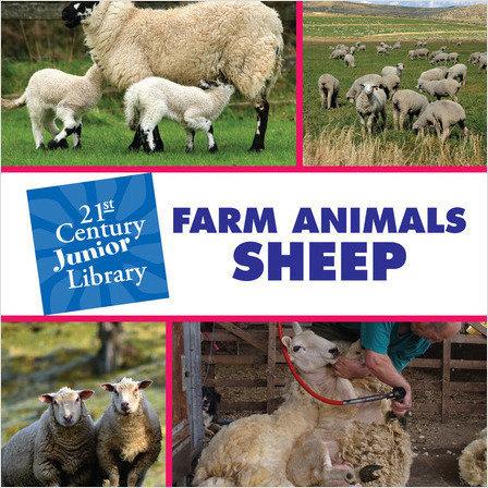 Cover: Farm Animals: Sheep