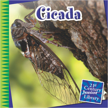 Cover: Cicada