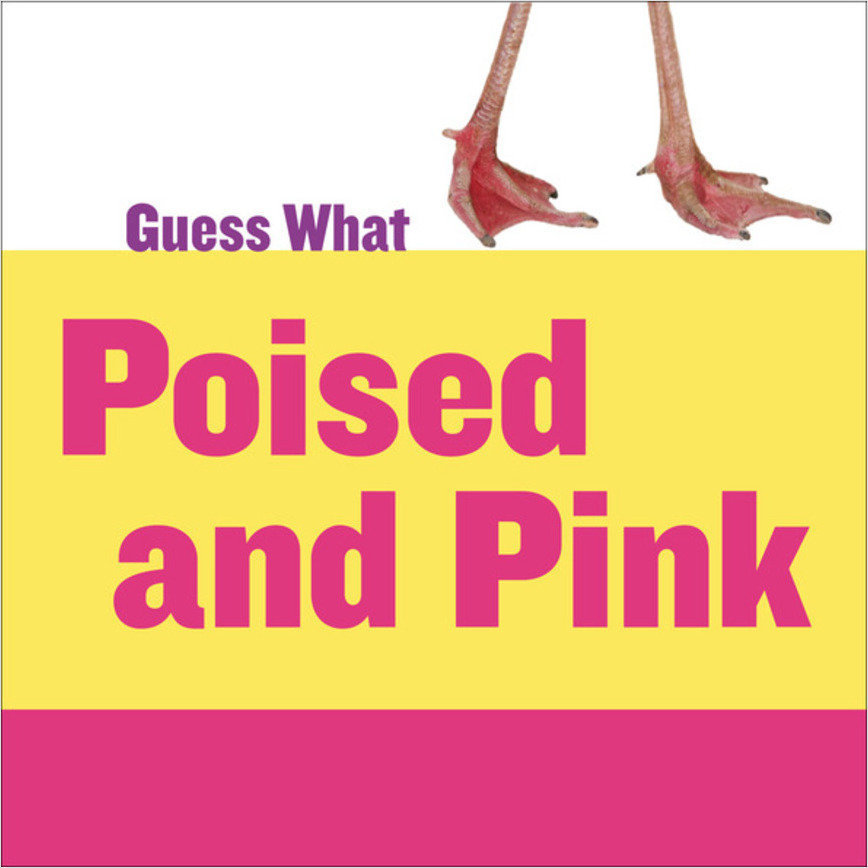 Cover: Poised and Pink: Flamingo